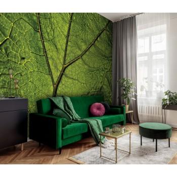 Fototapeta  13569 Liść zielony Makro (254 x 184cm) - Sklep z Fototapetami Tapetydekoracje.pl