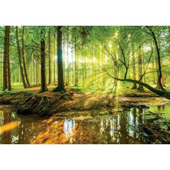 Fototapeta  10513 P4  Las (254 x 184 cm) - Sklep z Fototapetami Tapetydekoracje.pl