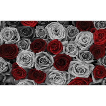 Fototapeta  3100 P4  Róże (254 x 184 cm) - Sklep z Fototapetami Tapetydekoracje.pl