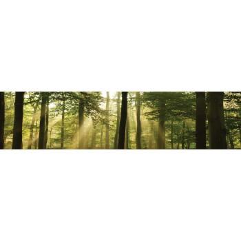 Fototapeta  10331 VEK  Las w słońcu (250 x 60 cm) vlies - Sklep z Fototapetami Tapetydekoracje.pl